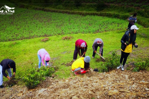 Social Responsibility: Pisac Reforestation Campaign
