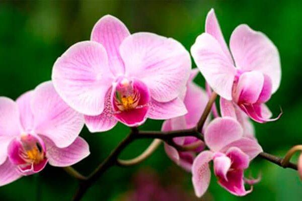 ¡Orquídeas en Machu Picchu! Visita el centro de conservación de orquídeas