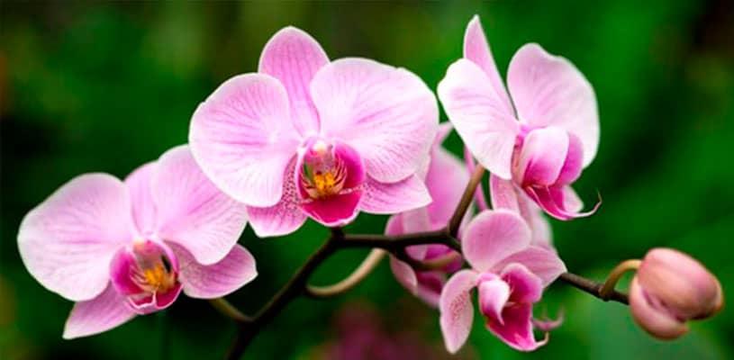 Existen aproximadamente 372 tipos de orquídeas en Machu Picchu